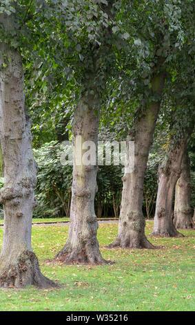 Ropner Park, Stockton on Tees. UK - Stock Photo