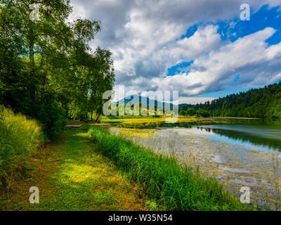 Green forest nature Mrzla vodica in Croatia