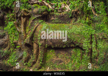 Balinese moss Background traveling to Bali concept - Stock Photo