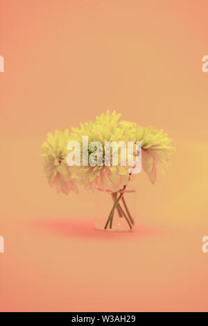 Beautiful yellow flowers on a living coral orange abackground. - Stock Photo