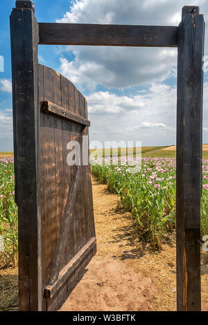 Gate in an Opium poppy field, Germerode, Werra-Meissner district, Hesse, Germany - Stock Photo