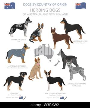 Dogs by country of origin. Australian dog breeds. Shepherds, hunting, herding, toy, working and service dogs  set.  Vector illustration - Stock Photo
