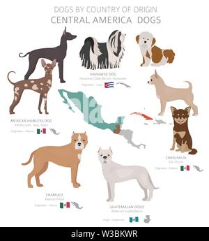 Dogs by country of origin. Central American dog breeds. Shepherds, hunting, herding, toy, working and service dogs  set.  Vector illustration - Stock Photo