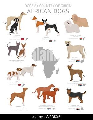 Dogs by country of origin. African dog breeds. Shepherds, hunting, herding, toy, working and service dogs  set.  Vector illustration - Stock Photo