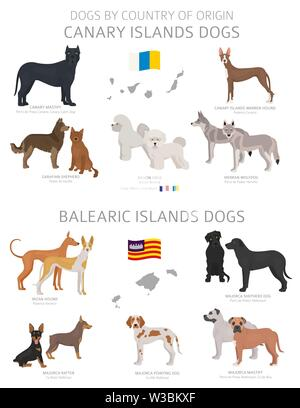 Dogs by country of origin. Canary and Balearic islands dog breeds. Shepherds, hunting, herding, toy, working and service dogs  set.  Vector illustrati - Stock Photo