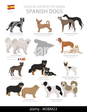 Dogs by country of origin. Spanish dog breeds. Shepherds, hunting, herding, toy, working and service dogs  set.  Vector illustration - Stock Photo