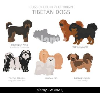 Dogs by country of origin. Tibetan dog breeds. Shepherds, hunting, herding, toy, working and service dogs  set.  Vector illustration - Stock Photo