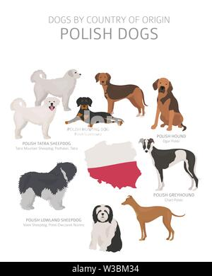 Dogs by country of origin. Polish dog breeds. Shepherds, hunting, herding, toy, working and service dogs  set.  Vector illustration - Stock Photo