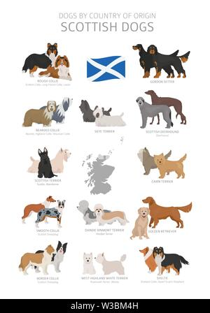 Dogs by country of origin. Scottish dog breeds. Shepherds, hunting, herding, toy, working and service dogs  set.  Vector illustration - Stock Photo