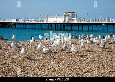 WORTHING, UK - JULY 13, 2019: Sea gulls sitting on the pebbel beach in front of art deco pier in Worthing - Stock Photo