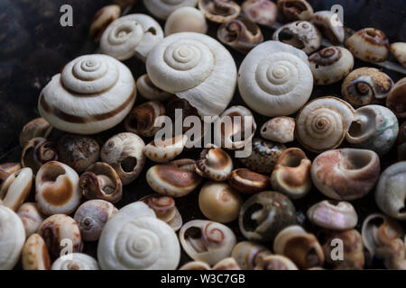 Assorted shells of many types and sizes are found on sea beaches. Close-up of seashells collection in summer day. Lots of cockleshell scallop piled to - Stock Photo