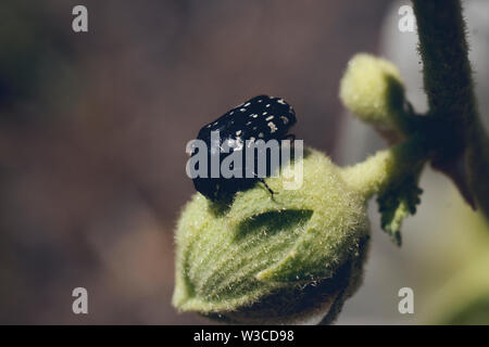 Black and white beetle on green plant - Stock Photo