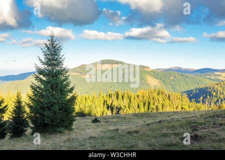 spruce forest on the edge of a hill. stunning landscape of apuseni natural park of romania. sunny afternoon weather in autumn. fluffy clouds on a blue - Stock Photo