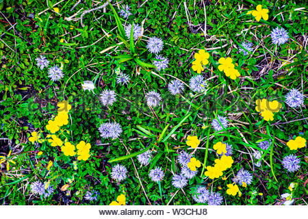 Violet yellow green flower in the green grass - Stock Photo