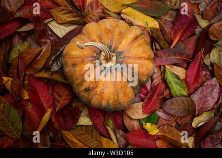 Overhead View of Ripe Pumpkin on Pile of Autumn Leafs - Stock Photo