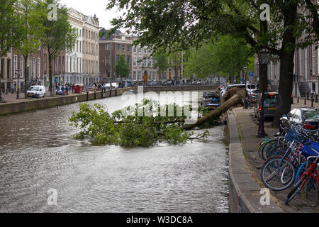 Amsterdam, Holland - June 09, 2019: Blown down tree in the canal after a heavy storm - Stock Photo
