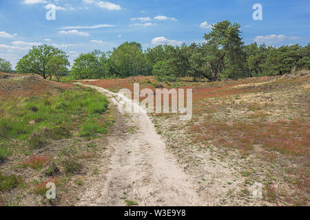 A path through the heather in the Plateaux-Hageven reserve - Stock Photo