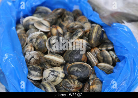 Shells of different colors for sale in the market. - Stock Photo