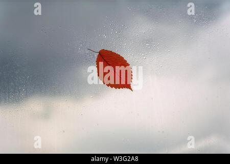 One orange leaf on wet window, rain drops. Concept of rainy weather, fall season, autumn. Abstract background - Stock Photo