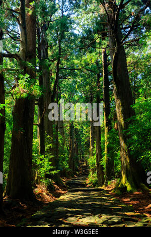 Famous Daimonzaka trail inside giant cypress forest, leading to Nachi falls, Japan - Stock Photo