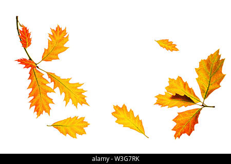 Autumn composition made of yellow red leaves on white background, isolated. - Stock Photo
