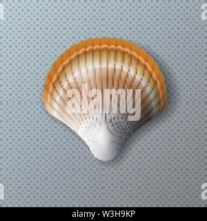 Vector Illustration with Beautiful Shell Isolated on Transparent Background. Vector Nature Sea Design Elemets with Realistic Marine Mollusk Seashell - Stock Photo