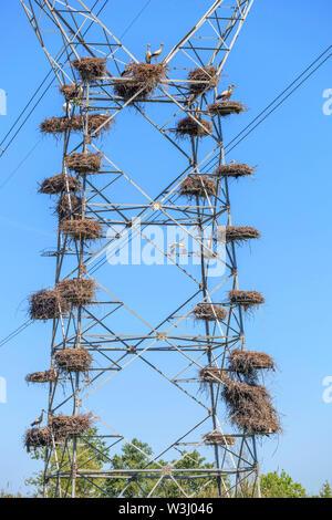 White stork nests on electricity pylons - Stock Photo