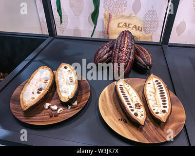 Cocoa fruit displayed in a display case in a stand at the chocolate fair - Stock Photo