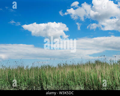 Summer white clouds against blue sky above reed beds near Snape Maltings Suffolk England