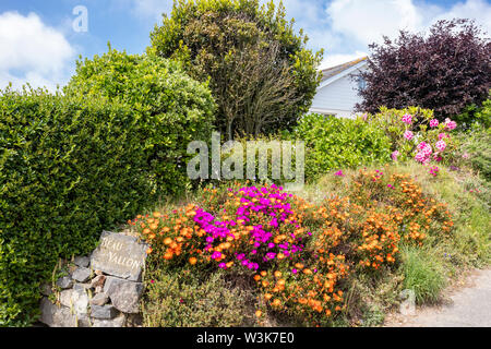 "A vivid display of flowers outside a property in  a ""Ruette Tranquille"",  a Quiet Lane near Petit Bot, Guernsey, Channel Islands UK - Stock Photo"