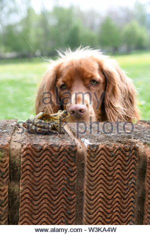 Humorous  Photo of Dog with the frog sat on the wall - Stock Photo