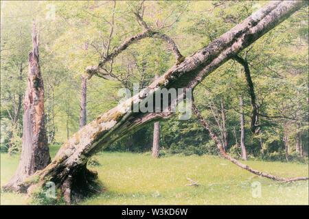 Fallen tree in Ordesa y Monte Perdido National Park - Parque nacional de Ordesa y Monte Perdido. Huesca Province, Aragon, Spain. - Stock Photo