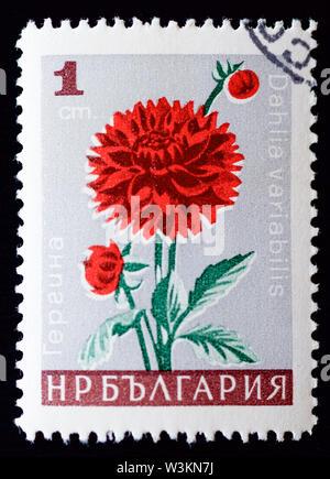 Bulgaria Postage Stamp - dahlia - Stock Photo