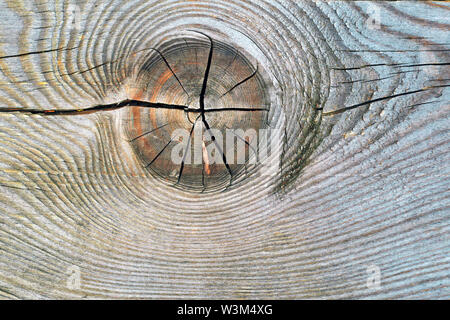The texture of the slice of the old rotten stump with cracks and annual rings.