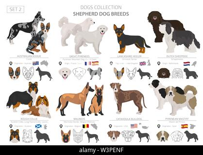 Shepherd and herding dogs collection isolated on white. Flat style. Different color and country of origin. Vector illustration - Stock Photo