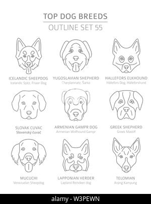 Top dog breeds. Hunting, shepherd and companion dogs set. Pet outline collection. Vector illustration - Stock Photo