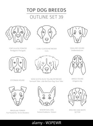 Top dog breeds. Hunting dogs set. Pet outline collection. Vector illustration - Stock Photo