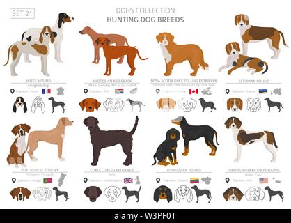 Hunting dogs collection isolated on white. Flat style. Different color and country of origin. Vector illustration - Stock Photo