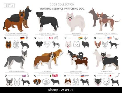 Working, service and watching dogs collection isolated on white. Flat style. Different color and country of origin. Vector illustration - Stock Photo