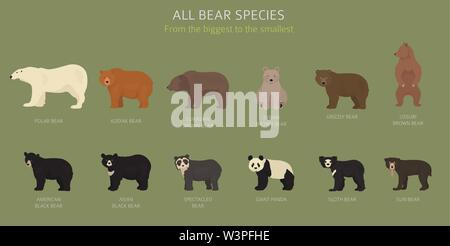 All world bear species in one set. Bears collection. Vector illustration - Stock Photo