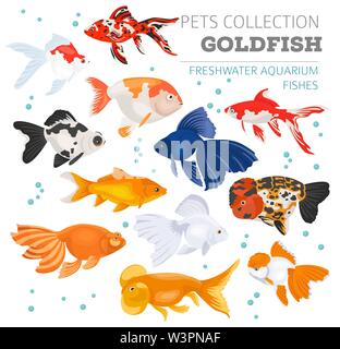 Freshwater aquarium fishes breeds icon set flat style isolated on white. Goldfish. Create own infographic about pets. Vector illustration - Stock Photo