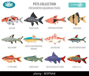 Freshwater aquarium fishes breeds icon set flat style isolated on white. Cyprinids. Create own infographic about pets. Vector illustration - Stock Photo