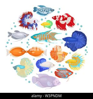 Freshwater aquarium fishes breeds icon set flat style isolated on white. Labyrinth fishes: betta, gourami. Create own infographic about pets. Vector i - Stock Photo