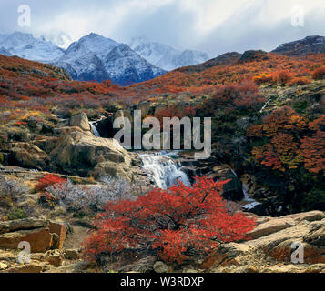 The clouds hid the Fitz Roy mount. Beech bushes and a small waterfall in the autumn forest. Los Glaciares National Park. Argentina. - Stock Photo