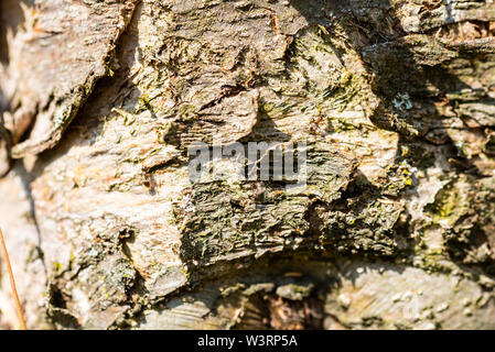 Focused motifs can be found during a walk through nature - Stock Photo