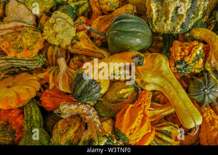 Pile of colorful gourds of all different kinds of shapes and sizes looking down close up - Stock Photo