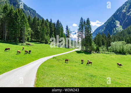 Idyllic mountain landscape with cows grazing in the Alps - Stock Photo