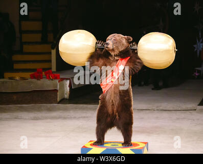 Circus brown bear on speech on the arena. - Stock Photo
