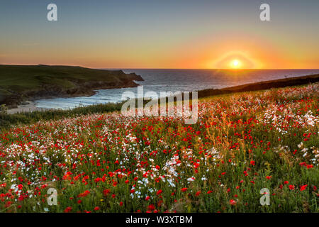 West Pentire; Sunset; Cornwall; UK - Stock Photo