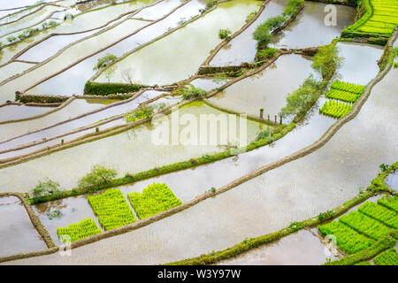 Elevated view of flooded rice terraces during early spring planting season, Batad, Banaue, Mountain Province, Cordillera Administrative Region, Philippines - Stock Photo